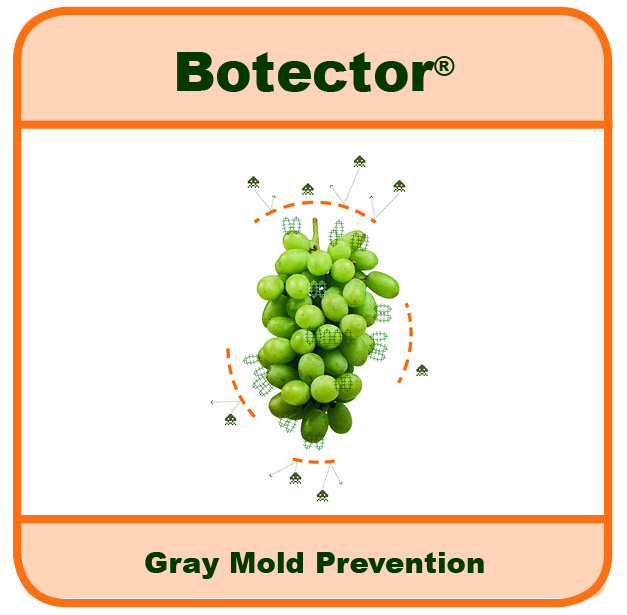 Botector logo  Botector approved by EPA as an Organic Biopesticide to Prevent Gray Mold in Grapes